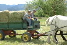 Heavy horse team pulling hay wagon